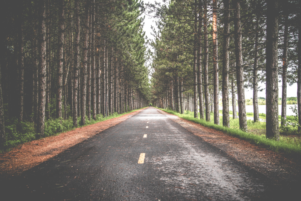 forestroad_unsplash